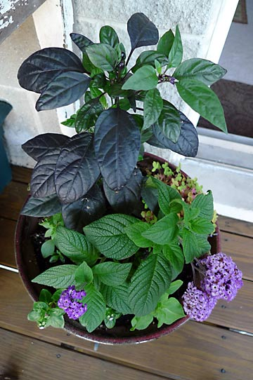 plant-p1000587-090721