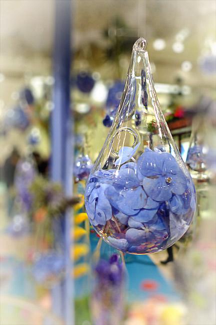 Blue-Flowers-w-P1000775